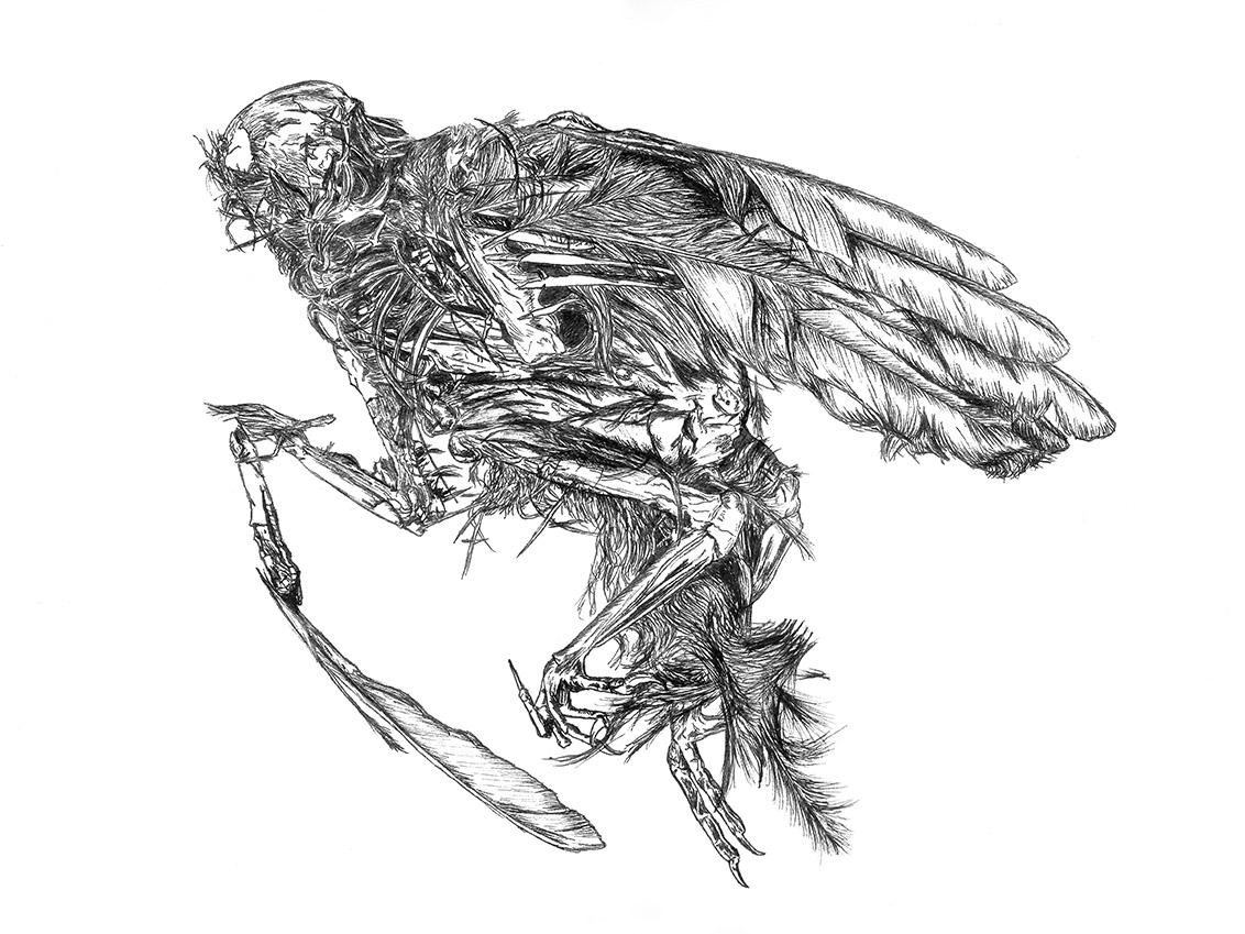 Dead Bird 1