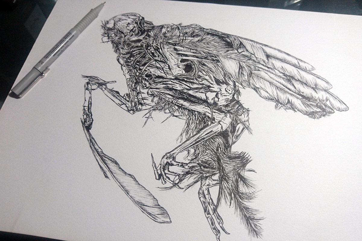 Dead_Bird_1-photo_small