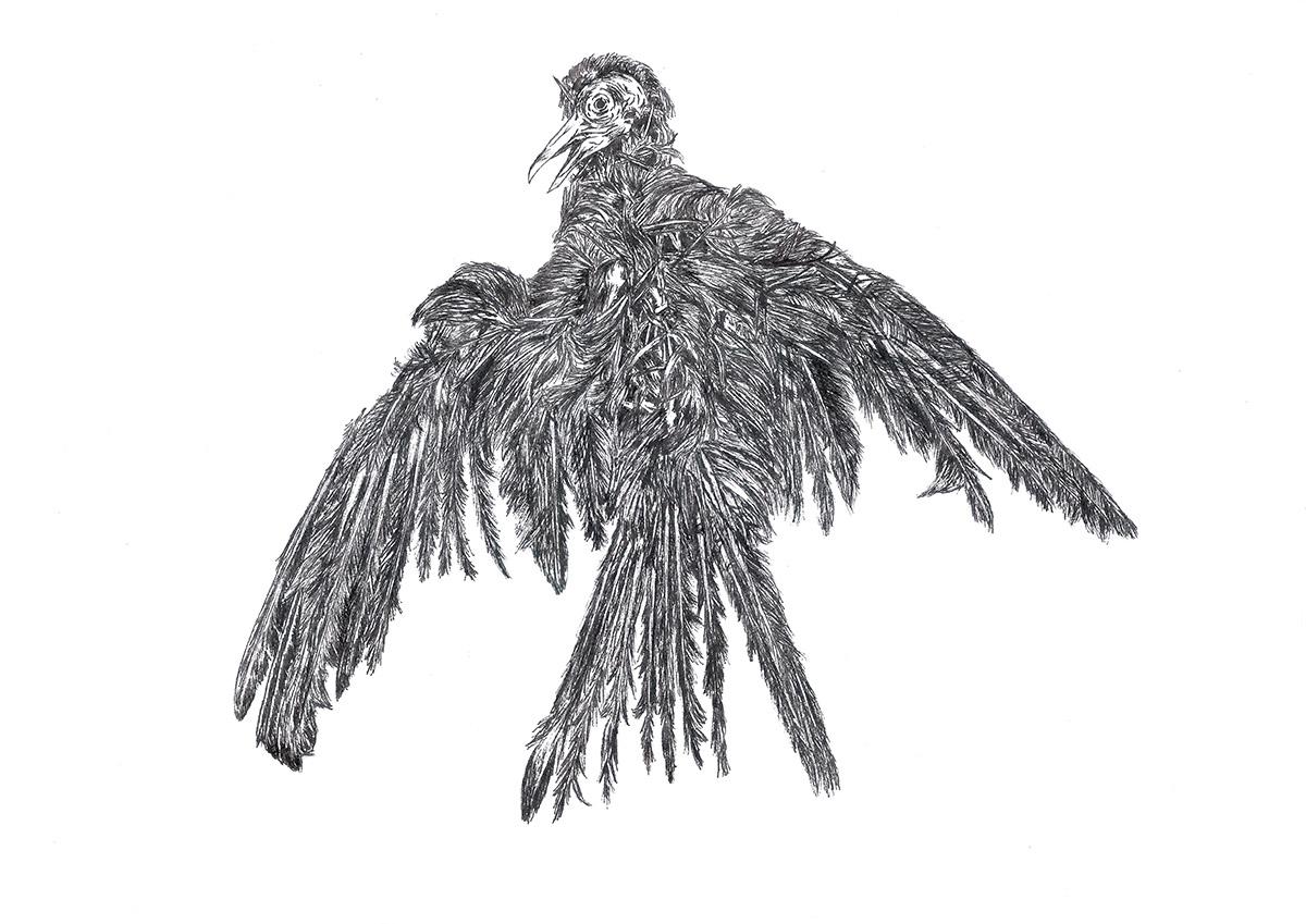 Bird-2-web