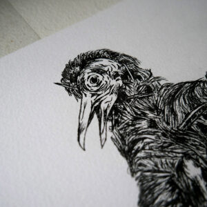 Bird-2-web2